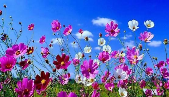 Primavera traz a beleza das flores de volta aos jardins