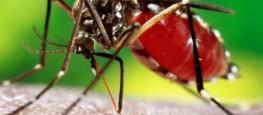 dengue41-546x330